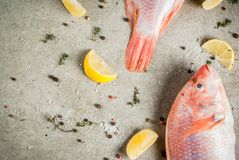 Fresh raw fish pink tilapia. With spices for cooking - lemon, salt, pepper, herbs, on gray stone table, copy space Stock Photo