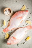Fresh raw fish pink tilapia. With spices for cooking - lemon, salt, pepper, herbs, on gray stone table, copy space top view Stock Image