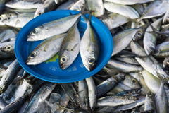 Fresh raw fish on plate for sale in the traditional fishery mark. Et, seafood in market Stock Photography