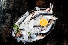 Fresh raw fish. With rosemary, lemon and salt on dark rusty background, copy space top view Royalty Free Stock Photos