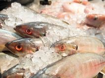 Fresh raw fish sale in market. Fresh raw fish sale in seafood department in supermarket Royalty Free Stock Image