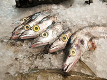 Fresh raw fish sale in market. Fresh raw fish sale in seafood department in supermarket Stock Images