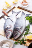 Fresh raw fish sea bass. With herbs and lemon on textured background Stock Image