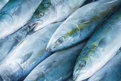 Fresh raw fish. In the sea food market Royalty Free Stock Images