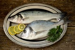 Fresh raw fish seabass and Dorado on an iron vintage tray and an old wooden background. Tasty food Stock Photos