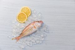 Fresh raw fish seafood and lemon ice with white wooden table background stock photo