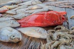 Fresh raw fish and seafood at market. Fresh raw sea fish and sea food market in Asia near fishermen village Royalty Free Stock Photos
