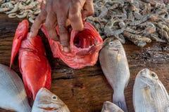 Fresh raw fish and seafood at market. Fresh raw sea fish and sea food market in Asia near fishermen village Royalty Free Stock Image