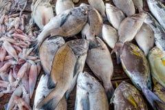 Fresh raw fish and seafood at market. Fresh raw sea fish and sea food market in Asia near fishermen village Stock Image