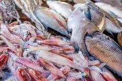 Fresh raw fish and seafood at market. Fresh raw sea fish and sea food market in Asia near fishermen village Stock Photos