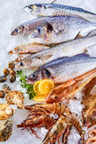 Fresh Raw Fish, Shellfish and Seafood on Ice Royalty Free Stock Photos