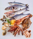Fresh Raw Fish, Shellfish and Seafood on White. High Angle Still Life View of Fresh Raw Fish, Shellfish and Seafood Arranged in Attractive Display on White Stock Photos