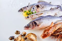 Fresh Raw Fish, Shellfish and Seafood on White. High Angle Still Life View of Fresh Raw Fish, Shellfish and Seafood Arranged in Attractive Display on White Royalty Free Stock Photography
