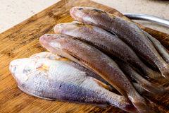Fresh raw fish. Some fresh raw fish on the cutting board Stock Images