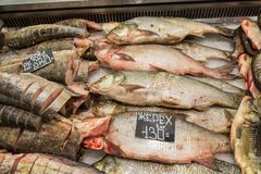 Fresh raw fish on the supermarket counter. River fish.  Stock Image