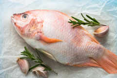 Fresh raw fish tilapia. Nile tiapia Oreochromis niloticus. Top view Royalty Free Stock Photo