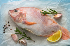 Fresh raw fish tilapia. Nile tiapia Oreochromis niloticus. Top view Royalty Free Stock Photos