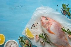 Fresh raw fish tilapia. Nile tiapia Oreochromis niloticus. Top view. Food cooking background Stock Image