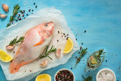 Fresh raw fish tilapia. Nile tiapia Oreochromis niloticus. Top view. Food cooking background Royalty Free Stock Photography