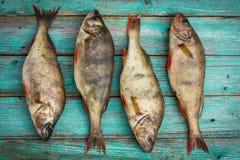 Fresh raw fish Stock Images