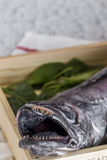 Fresh raw fish on wooden board. Background. From above Royalty Free Stock Image