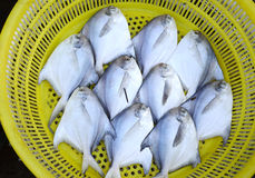 Fresh raw fish in yellow basket. Fresh raw fish at a market place Royalty Free Stock Photography
