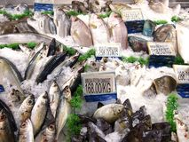 Fresh raw fishes. Photo of fresh raw fishes Stock Photo