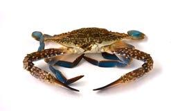 Fresh raw flower crab Royalty Free Stock Photos