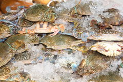 Fresh raw flower crab. Or blue crab in Thailand fresh mark Stock Image