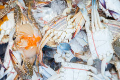 Fresh raw flower crab or blue crab. In Thailand fresh market Royalty Free Stock Images