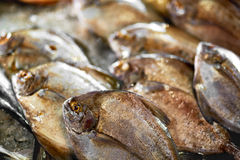 Fresh Raw Food. Fish At Market. Seafood. Healthy Nutrition. Fresh Raw Food. Close Up Of Variety Of Fresh Caught Fish On Crashed Ice At Fish Market In Thailand Stock Image
