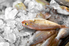 Fresh Raw Food. Fish At Market. Seafood. Healthy Nutrition. Fresh Raw Food. Close Up Of Variety Of Fresh Caught Fish On Crashed Ice At Fish Market In Thailand Royalty Free Stock Images