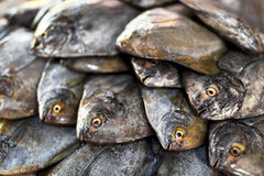 Fresh Raw Food. Fish At Market. Seafood. Healthy Nutrition. Fresh Raw Food. Close Up Of Variety Of Fresh Caught Fish On Crashed Ice At Fish Market In Thailand Royalty Free Stock Photos