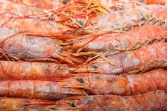 Fresh raw frozen langoustines as a background. Close up pink frozen langoustines at supermarket Stock Images