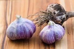 Fresh raw garlic. Close up of garden fresh raw garlic on a wooden cutting board Stock Photos