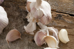 Fresh raw garlic cloves. Separated from the bulb with one peeled one amongst several with their skin on a rustic wooden table Royalty Free Stock Image