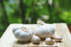 Fresh raw garlic on wooden table in garden, copy space, outdoor kitchen raw ingredient concept Stock Photo
