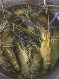 Fresh raw giant river prawn or river shrimp. In a basket at local market in Thailand.fresh shrimp / seafood Stock Photos