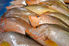 Fresh raw golden snapper Stock Photo