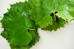 Fresh raw grape leaves on white background. Space for text or menu Royalty Free Stock Images