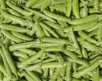 Fresh raw green beans closeup. Natural background Stock Images