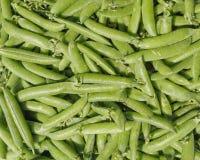 Fresh raw green beans closeup Stock Images