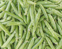 Fresh raw green beans closeup. Natural background Royalty Free Stock Image