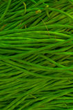 Fresh Raw Green beans Royalty Free Stock Photography