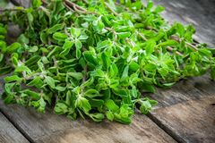 Fresh raw green herb marjoram on a wooden table Stock Images