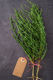 Fresh raw green samphire. Samphire coastal vegetable over black background. Salicornia europaea Stock Photos