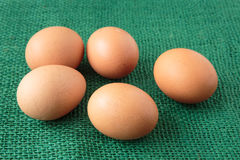 Fresh raw group of eggs put on green sack Royalty Free Stock Photography