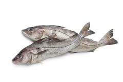 Fresh raw haddock fished. Whole single fresh raw haddock fishes at white background Stock Photos