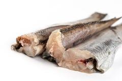 Fresh raw hake fish isolated over white background.  Stock Image
