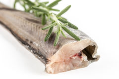 Fresh raw hake fish on the white background with rosemary.  Royalty Free Stock Photography
